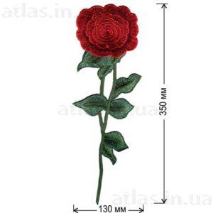роза длинная красная